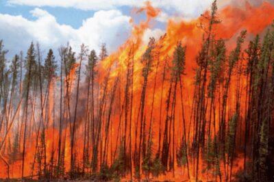 Open biomass